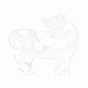 white cow kit and kee
